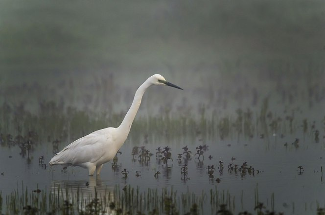Ledács Kiss Gábor: Reggeli ködpára – Balaton-felvidéki Nemzeti Park